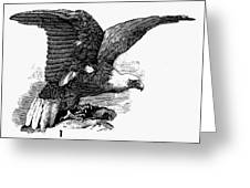 Eagle, 19th Century Greeting Card