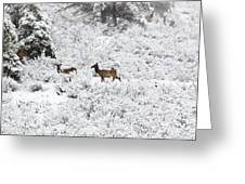 Elk In Deep Snow In The Pike National Forest Greeting Card