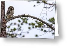Hawk Owl Greeting Card