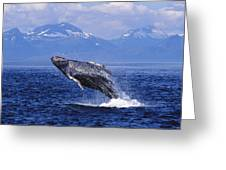 Humpback Whale Breaching Greeting Card