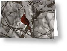 Male Cardinal Greeting Card