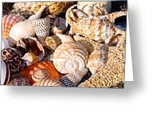 Mix Group Of Seashells Greeting Card