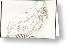 Mourning Dove, Animal Portrait Greeting Card