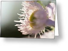 Pastel Purple Flowers Greeting Card