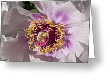 Peony Flower Greeting Card