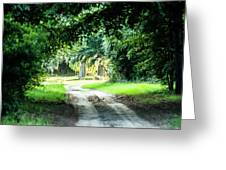 Scenes At Botany Bay Plantation Near Charleston South Carolina Greeting Card