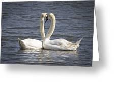 Swan -- Greeting Card