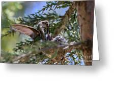 7311 Tilted Nest Feeding Greeting Card