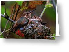 7389 All Feathered Out Greeting Card