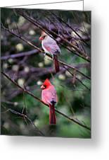 7440-008 Cardinal Greeting Card