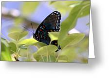 7759 - Butterfly Greeting Card