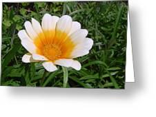Australia - White Yellow Daisy Flower Greeting Card