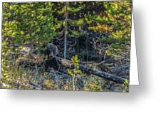 791 In The Forest Greeting Card