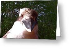 Australia - Kookaburra Stickybeak Greeting Card
