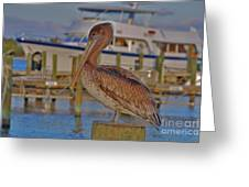 8- Brown Pelican Greeting Card