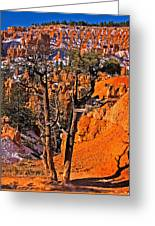 Bryce Canyon N.p. Greeting Card