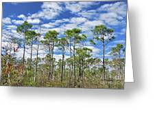 8- Cypress Sky Greeting Card
