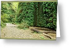 Fern Canyon Greeting Card