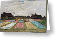 Flower Beds In Holland Greeting Card