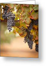 Grapes On The Vine Greeting Card by Andy Dean