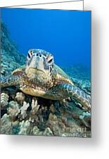 Hawaii, Green Sea Turtle Greeting Card