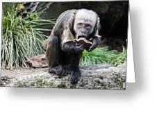 Monkey Greeting Card