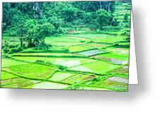 Rice Fields Scenery Greeting Card
