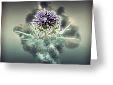 Silybum Eburneum Milk Thistle Greeting Card