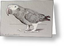 Timneh Grey Parrot Greeting Card
