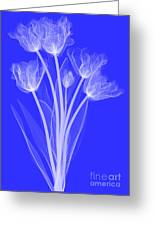 Tulips, X-ray Greeting Card