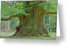 800 Years Old Oak Tree Greeting Card by Heiko Koehrer-Wagner