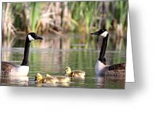 8132 - Canada Goose Greeting Card