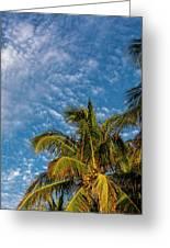 8156- Palm Tree Greeting Card