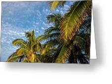 8167- Palm Tree Greeting Card