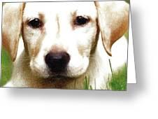 Dog Greeting Card