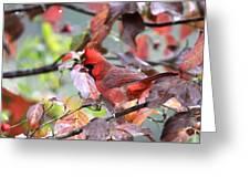 8627-001 - Northern Cardinal Greeting Card