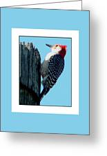#8671 Woodpecker Greeting Card