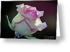 Nice Rose Greeting Card