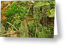 Mosses And Liverworts 8861 Greeting Card