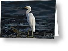89- Snowy Egret Greeting Card