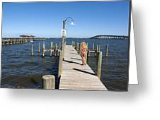 Indian River Lagoon At Eau Gallie In Florida Usa Greeting Card