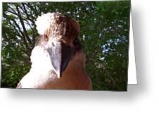 Australia - Kookaburra I'm Looking At You Greeting Card