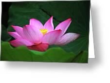Blossoming Lotus Flower Closeup Greeting Card