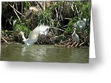 Cattle Egret Cooling Off In The Lake Greeting Card