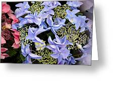 Close-up Of Flowers Greeting Card