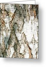 Detail Of Brich Bark Texture Greeting Card