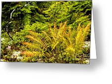 Fall Color Fern Greeting Card