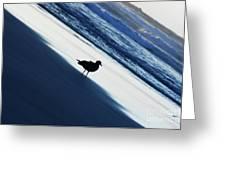 Bird On A Beach  Greeting Card
