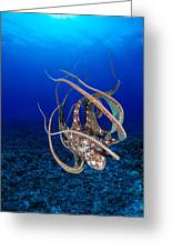 Hawaii, Day Octopus Greeting Card