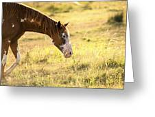 Horse In The Countryside  Greeting Card